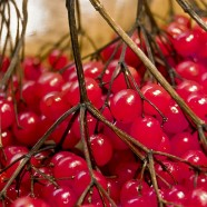 Top Foods for Disease Prevention and Anti-Aging