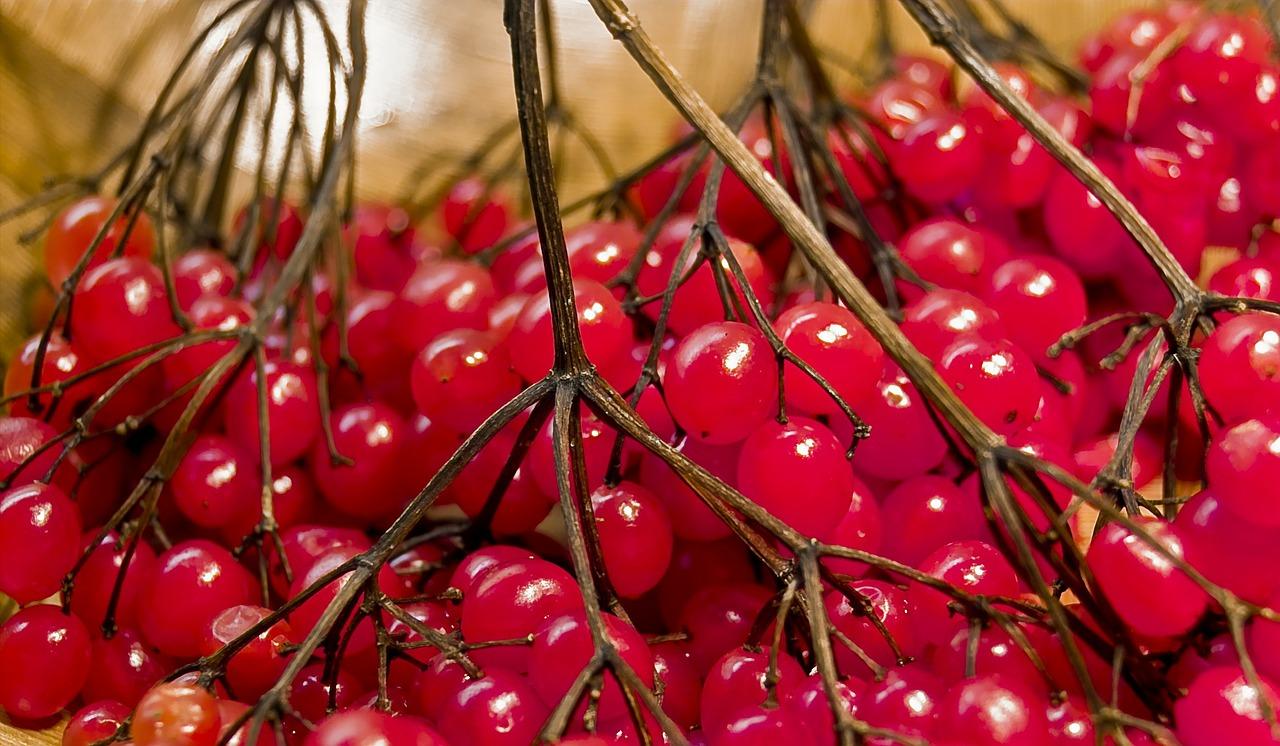 berries-83946_1280