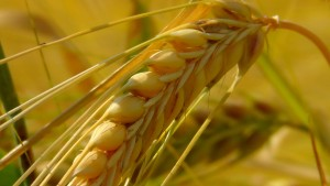 cereals-163312_1280