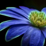 flower-184847_1280