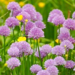 flower-276012_1280