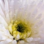 flower-445258_1280