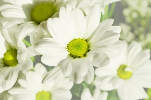 flowers-164860_1280