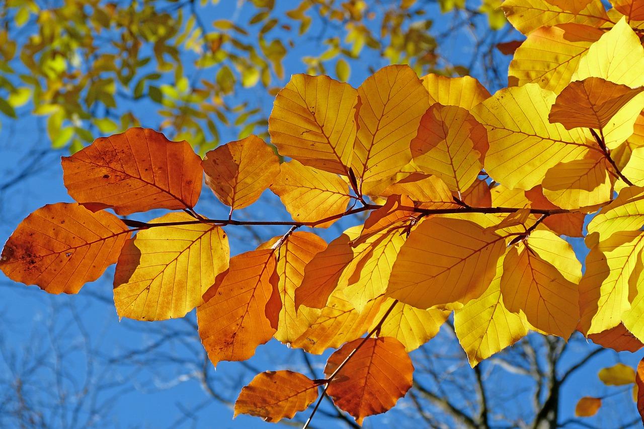 foliage-539413_1280