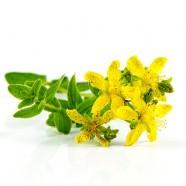Herbs the Gentle Healers