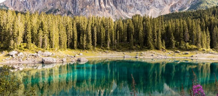 Forest Bathing Enhances Natural Killer Cell Activity
